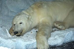 muzej-arktiki