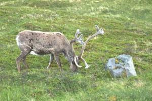 mys-nordkap-norvegija