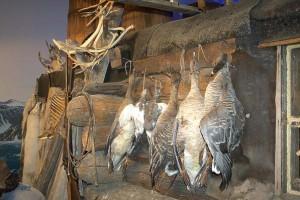 norvegija-muzej-arktiki