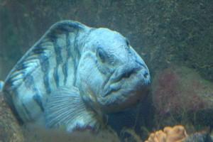 olesunn-akvarium