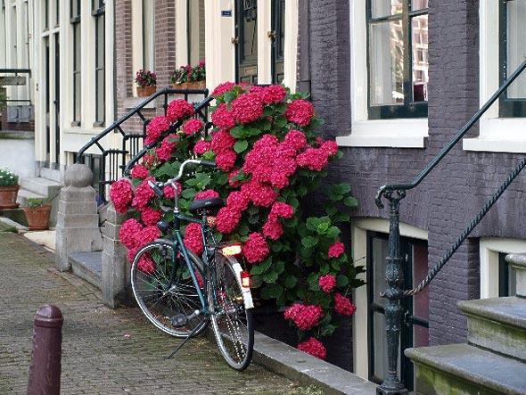 amsterdam-jordan
