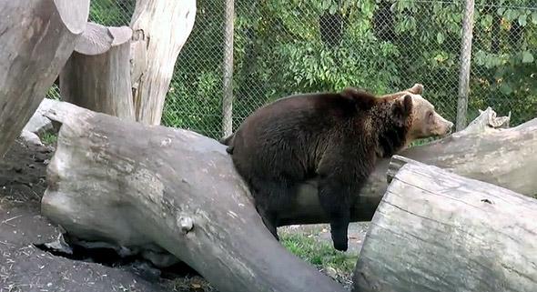 скансен зоопарк