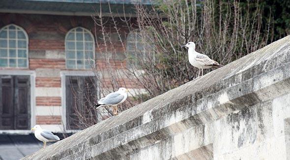 чайки позируют