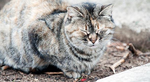 достопримечательность города стамбульские кошки
