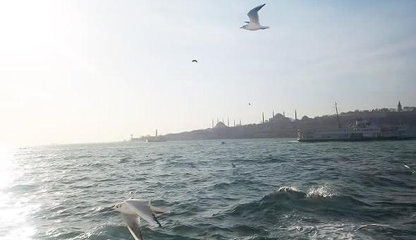 стамбул азия чайки