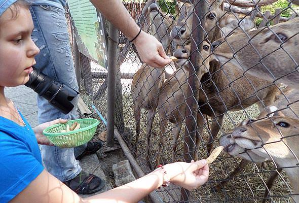 чиангмай экскурсии кормление животных