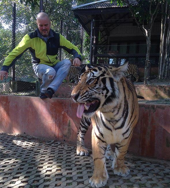 саня идет к тиграм
