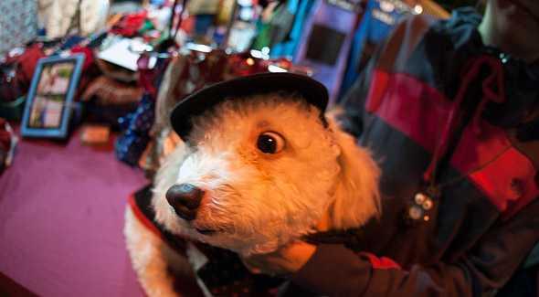 собачонка в шапочке