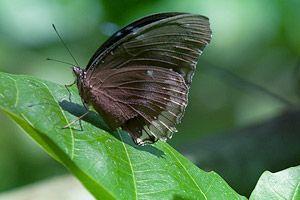 чиангмай достопримечательности ферма бабочек