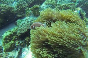 тайланд остров ко чанг подводные чудеса