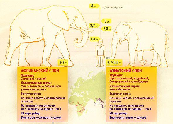 про слонов цифры