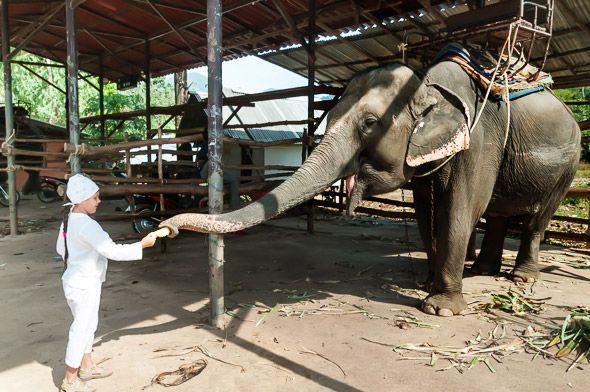 скормить банан слону