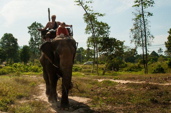 слон четырехтонный живой танк