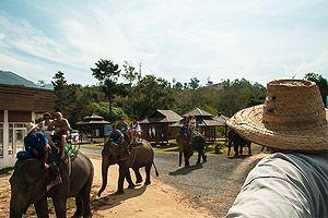 слоны в тайланде бывшем сиаме