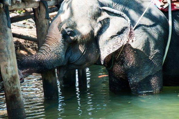 забавные слоны