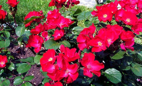 цветы в троице-сергиевом монастыре