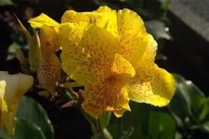 какие цветы на бали