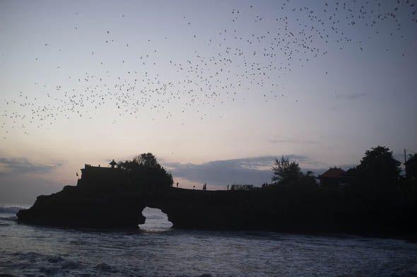 летучие мыши тучей над храмом бали