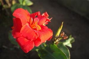 роскошые цветы бали