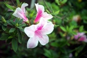 великолепные цветы бали