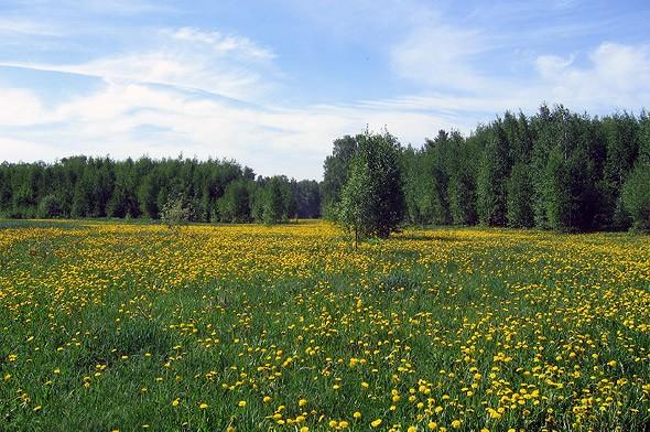 цветочные поля около тишково