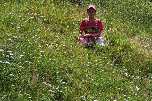 луга с сочными травами