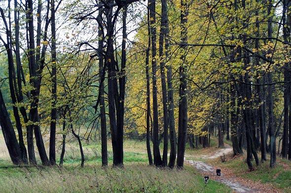 чудесное место усадебный парк тишково