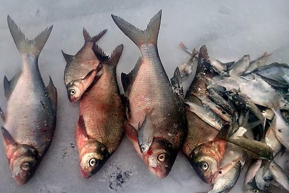 будущая начинка пирога рыбника