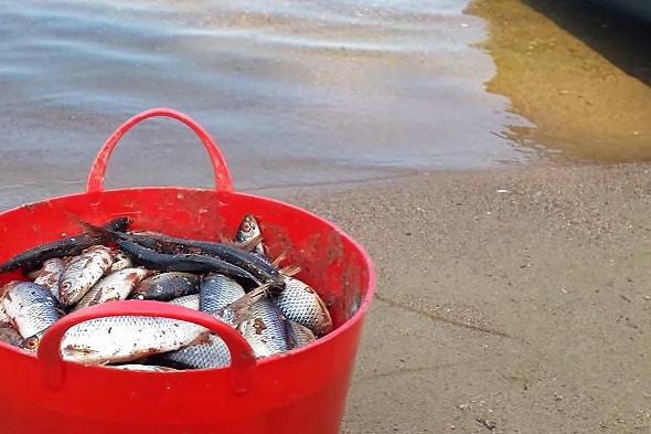 рыба пойманная на селигере