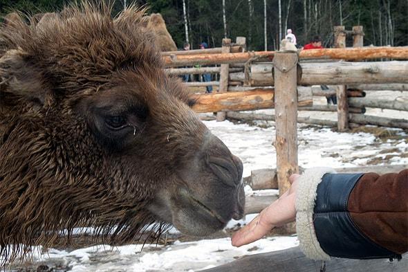 покормить животных с рук