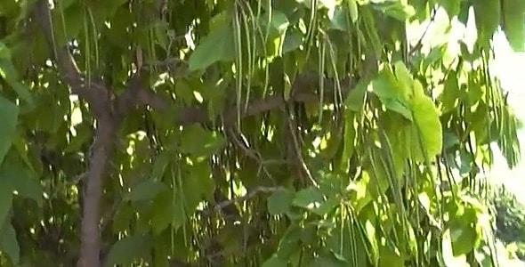 висят длинные зеленые макаронины
