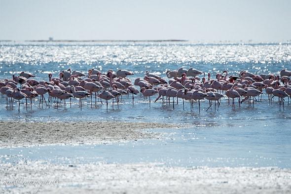 на прибрежных песках намибии