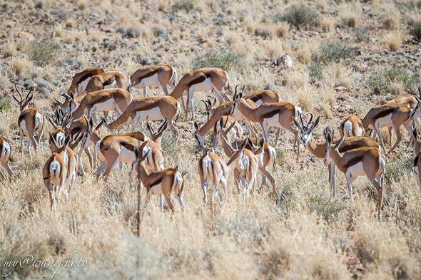 природа и обитающие звери