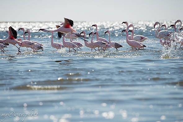 места обитания птиц где вода для выпаривания