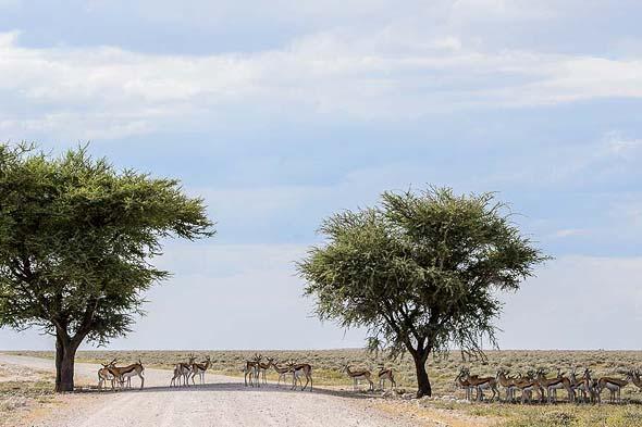 бегающие по пустой дороге