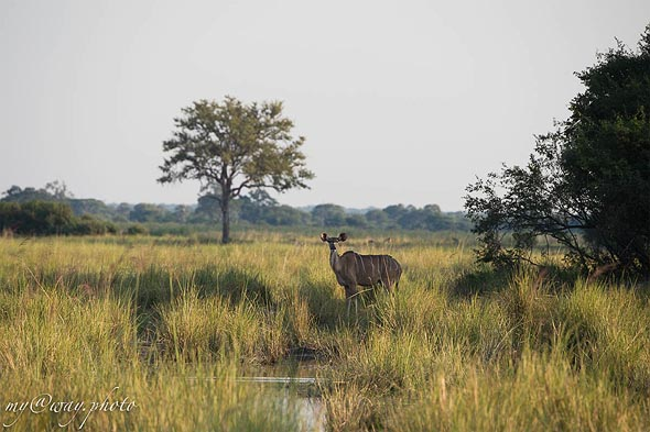 просторы дикой африканской природы