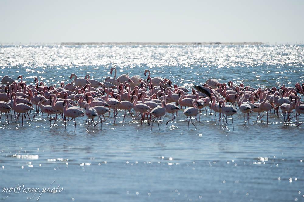 кому не достаточно розовых фламинго