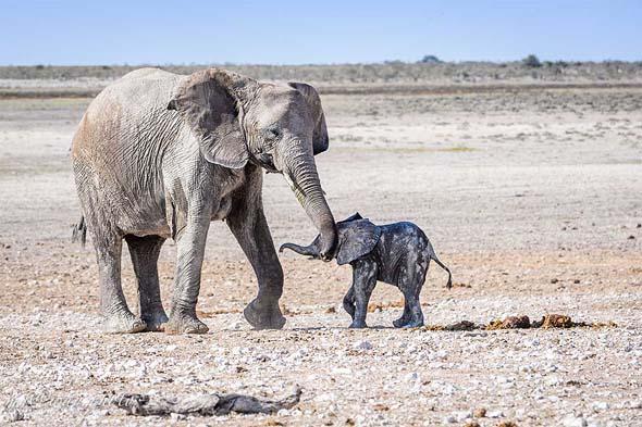 крупные животные слоны