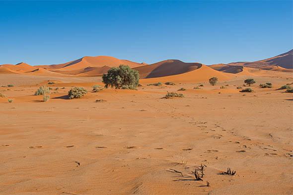 в старейшей на земле пустыне намиб