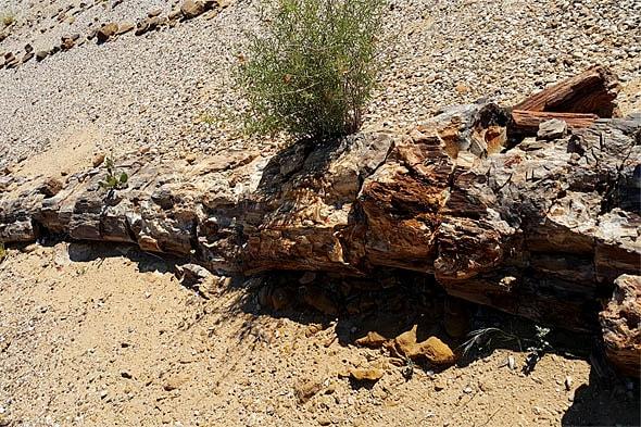массивные окаменевшие стволы древнего леса