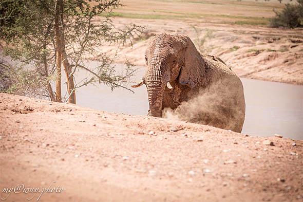 пустынные слоны живут около эфемерных рек