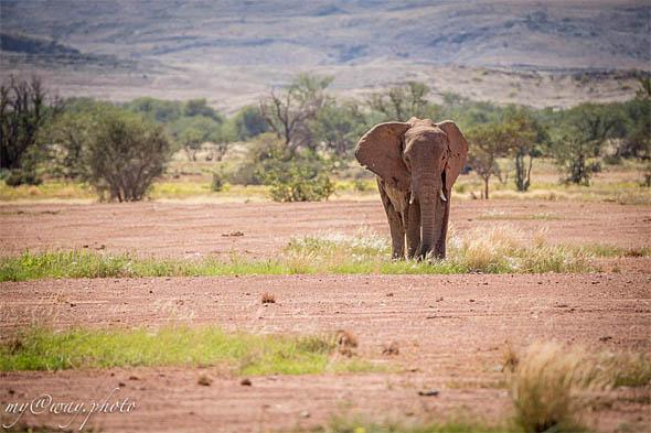 где обитают пустынные слоны