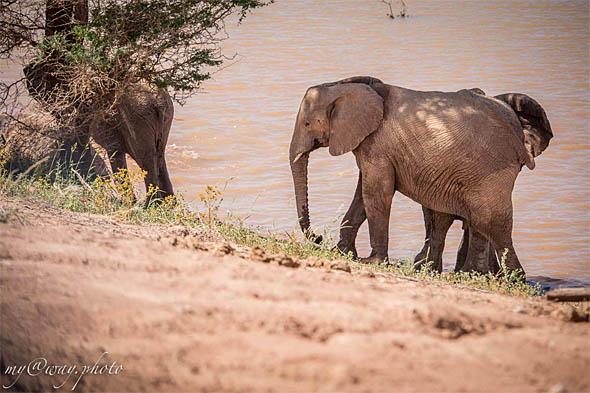 слоны самые опасные животные намибии