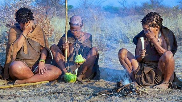 плоды тсаммы хорошо утоляют жажду