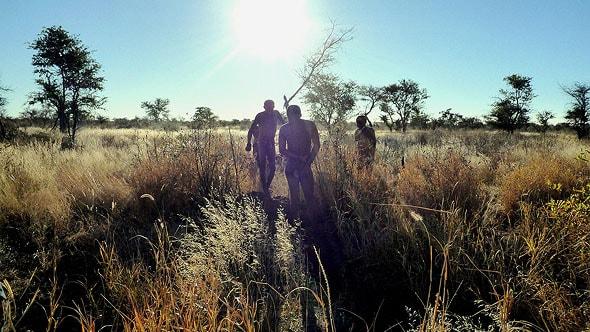 охотники бушмены в калахари