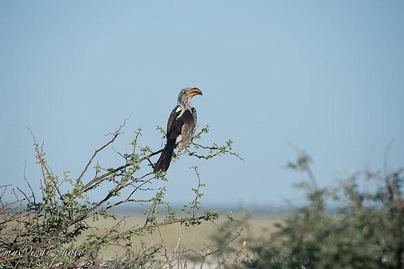 бердвотчер занимается наблюдением за птицами
