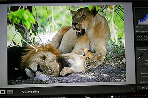 охота с фотоаппаратом в намибии