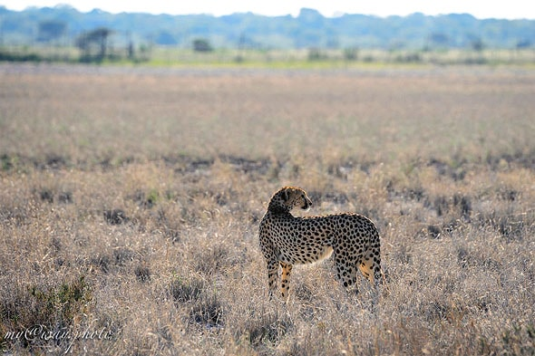миг и гепард точка на горизонте