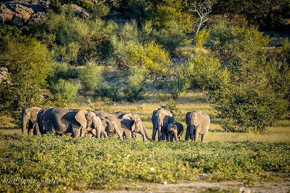 слоны компания гигантов