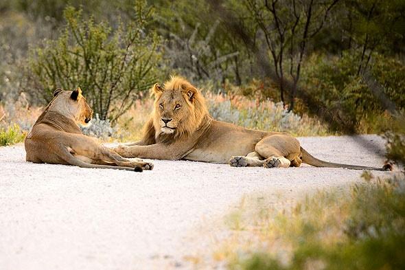 млекопитающие парка этоша